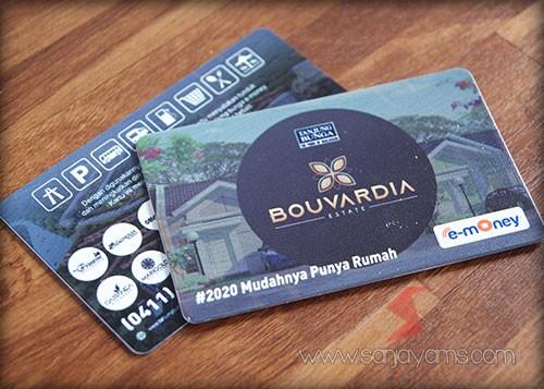 Emoney - Bouvardia